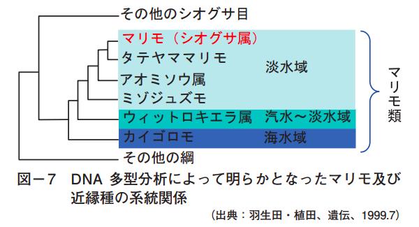 マリモとその近縁種の分類