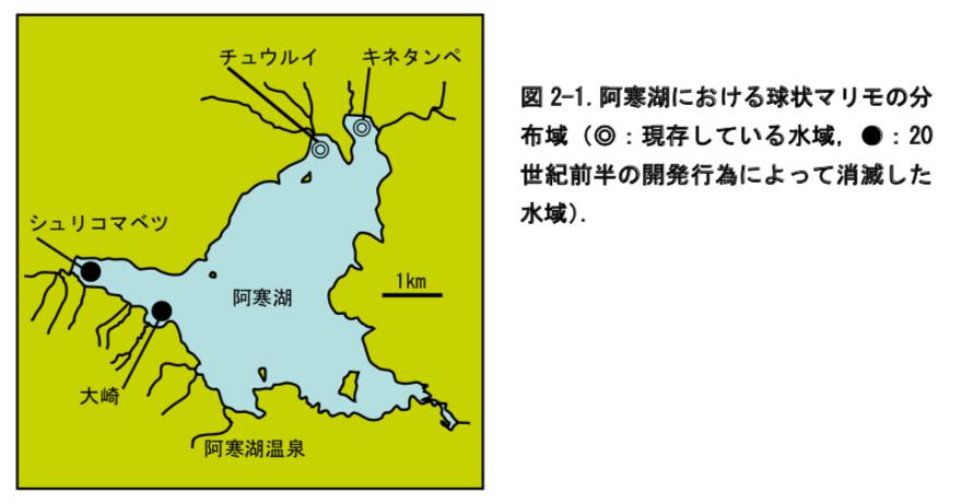 阿寒湖における球状マリモの分布域